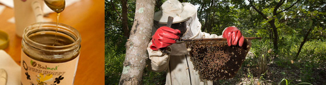 New opportunities to boost honey value chain in Sierra Leone